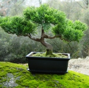 La naturaleza en miniatura