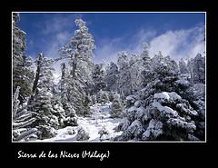 Visita a la Sierra de las Nieves