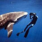 Viajes para submarinistas