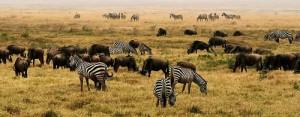 Safari en Kenia: un recorrido por los principales destinos de África