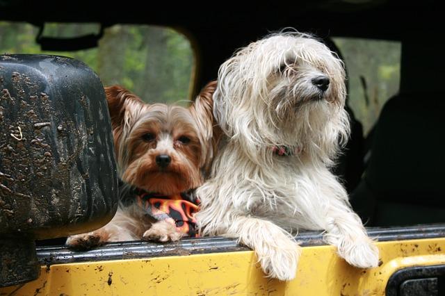 8 consejos para un viaje con tu perro