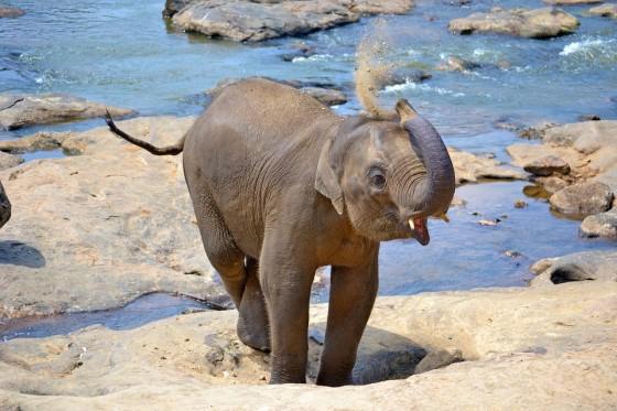 Aventuras infinitas en las tierras altas de Sri Lanka