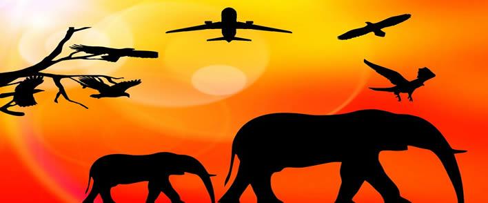 Viaje a África: los destinos inevitables