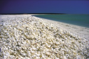 La asombrosa playa de conchas de Shell beach