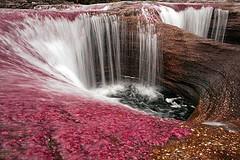 El Cañón Cristal , el maravilloso río de los 5 colores.