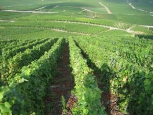 Turismo relacionado con el vino