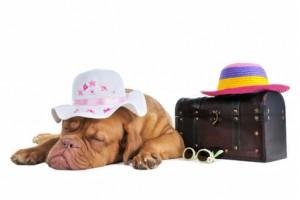 Hotel para perros en Madrid | Vete de vacaciones y déjalos en buenas manos