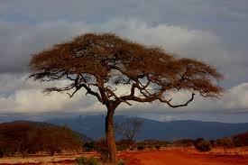 Los 5 lugares que debes visitar en Kenia