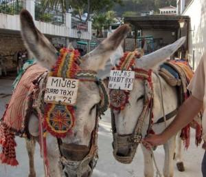 Los burro-taxi de Mijas