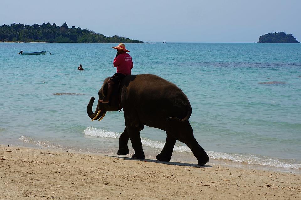 ¿Qué hacer en las islas Andaman y Nicobar, las perlas de la bahía de Bengala?
