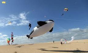 Las 5 mejores actividades en el mar de Fuerteventura